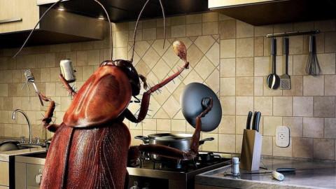 Штраф до 250 тысяч рублей за тараканов и блох