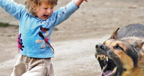 Взыскание компенсации морального вреда за нападение собаки
