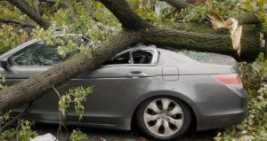 ВС РФ. Взыскание ущерба за упавшее на автомобиль дерево