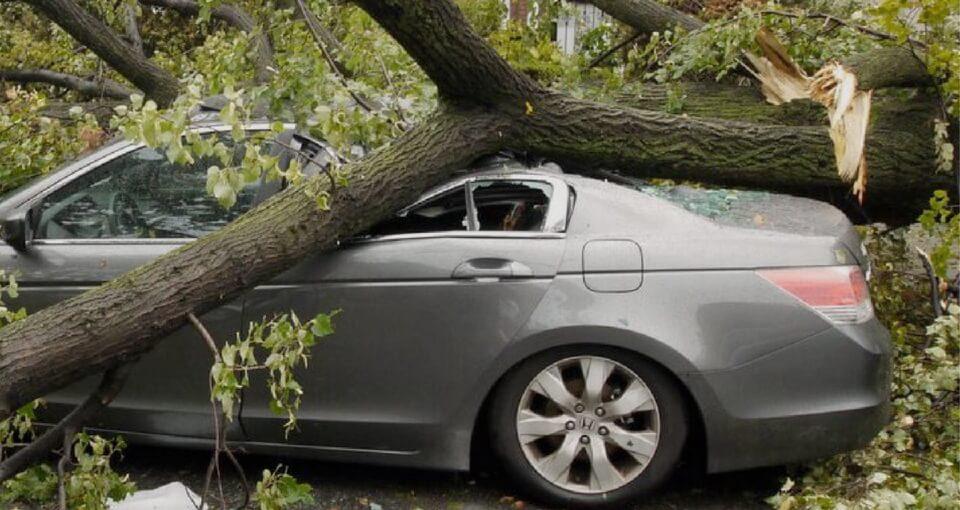 ВС РФ. Взыскание ущерба за повреждение автомобиля упавшим деревом
